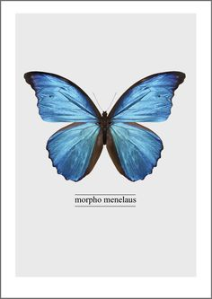 Posters Diy Crafts For Home diy christmas crafts at home Morpho Butterfly, Butterfly Effect, Blue Butterfly, Posters Diy, Vintage Posters, Free Poster, Butterfly Illustration, Quelques Photos, Butterfly Painting