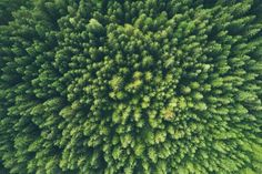 Sommer Dahoam | 1000things Forest Light, Tree Forest, Chongqing, Trees Top View, Arbor Day Foundation, Vida Natural, World Environment Day, Arbour Day, Eco Friendly House