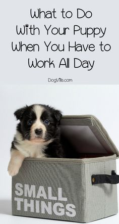Wondering what to do with a puppy when you're at work all day? Check out our top three tips for how to raise your pup while working!