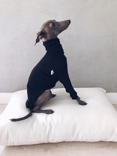 italian greyhound and whippet clothes / iggy clothes / Dog Sweater / stripes dog clothes / ropa para galgo italiano y whippet Perro Whippet, Whippet Puppies, Corgi Puppies, Italian Greyhound Puppies, Italian Greyhound Clothes, Italian Greyhound Dog, Grey Hound Dog, Dog Sweaters, Whippets