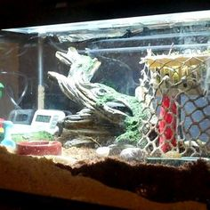 How To Make A Hermit Crab Habitat... has food list including commercial