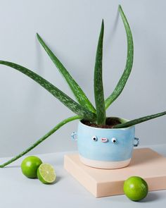 marzia crafts gang of pottery creatures with latest collection, maì accents Ceramic Clay, Ceramic Pottery, Pottery Art, Slab Pottery, Thrown Pottery, Ceramic Bowls, Diy Clay, Clay Crafts, Arts And Crafts
