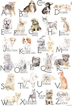 Artist Lauren Rogoff's unique dog breed poster features original watercolor portraits of different dog breeds for each letter of the alphabet.