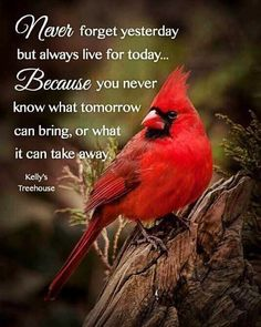 Life Quotes Love, Great Quotes, Me Quotes, Inspirational Quotes, Qoutes, Motivational Quotes, Cardinal Birds Meaning, Miss My Mom, Bird Quotes