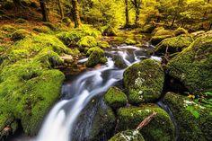 Fall in Dartmoor#plymouth #ilovesouthdevon#visitbritain #lovefordevon#ukpotd#SWisBest#naturelover #britainsoceancity #greatoutdoors #instagood #igtravel @visitdartmoor #visitengland #wanderlust #travelgram #fall #autumn