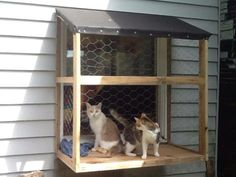would need to be screened in though. Diy Cat Enclosure, Outdoor Cat Enclosure, Diy Cat Tree, Cat Window, Cat Run, Outdoor Cats, Cat Decor, Pet Furniture, Cattery