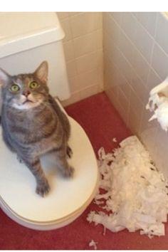 Ha ha ha!  I'm a clever Kitty, la la la!