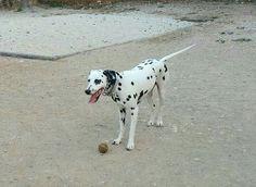 Juegos en el parque canino  05/16 Dama