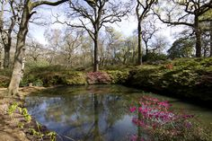 Still Pond at Isabella Plantation. - Still pond at Isabella Plantation, Richmond Park, London. Beautiful Places In The World, Most Beautiful, Richmond Park, Places Of Interest, Countryside, Pond, United Kingdom, Parks, Alice