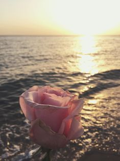 Rose by the sea Flower Phone Wallpaper, Iphone Wallpaper, Flower Backgrounds, Wallpaper Backgrounds, Image Nature, Flower Aesthetic, Jolie Photo, Landscape Illustration, Illustration Art