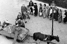 """Tauschen, betteln, fringsen: Berliner stehen Schlange, um Kartoffelschalen gegen Brennholz zu tauschen (Foto von 1947). Wer nichts zum Tauschen hatte, musste betteln oder aber """"fringsen"""" gehen - benannt nach dem Kölner Erzbischof Josef Kardinal Frings. In seiner Silvesterpredigt 1946/47 hatte der Kölner Oberhirte Verständnis dafür geäußert, wenn Menschen sich in der Not nahmen, was sie zum Überleben brauchten. Kalter Winter, Total War, Great Power, World War Two, Wwii, Period, Germany, Military, History"""