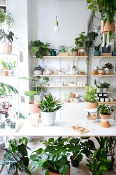The Chic Houseplants You Should Be Buying in 2018