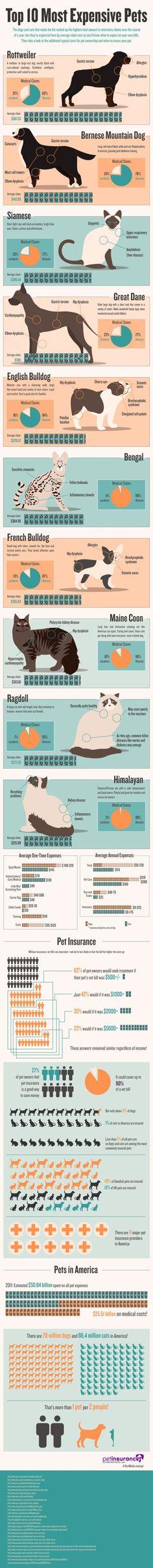 Pet-Insurance-Comparison-Infographic-1
