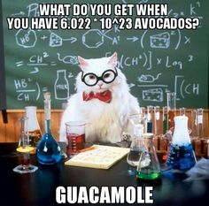 Chemistry Cat gives his guacamole recipe :)