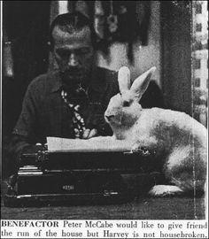 Copy Editor Rabbit