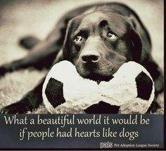 So true, and I am not even big on dogs. If only people had hearts like dogs..