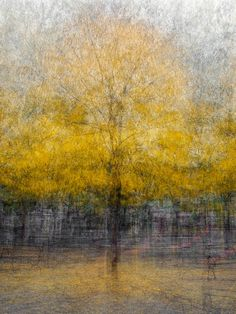 """""""...In this series,... multiple shots of each tree were taken while walking in a circle around it, then blended together and reworked... """" Pep Ventosa"""
