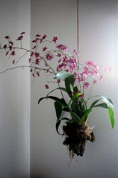 DIY Orchidée suspendue