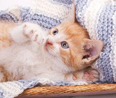 Your 2 to 3 month-old-cat is learning and changing quite a bit. Here are key things to know about kitten development, health issues and behavior changes.