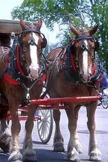 Horses on Mackinac Island   - Courtesy of Mackinac Island CVB