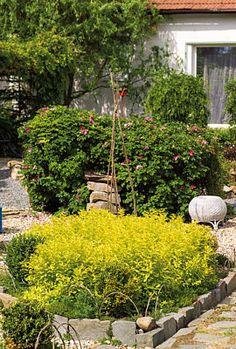 Pravidelně stříhaná zelená stěna z růží svraskalých dělí zahrádku na dvě části s odlišným využitím a zároveň vytváří dokonalou kulisu pro kamenné ptačí napajedlo.