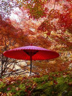 神護寺:紅葉と野点傘
