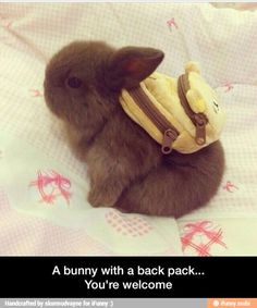 A bunny with a backpack - you're welcome!
