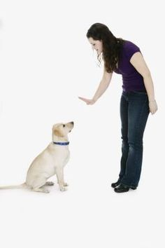 How to Dominate an Alpha Dog