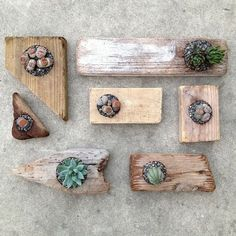Driftwood succulent planters. Great project for kids who want to work out in the shop too