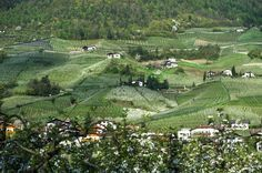 Marlinger Waalweg - Urlaub in Lana bei Meran - Südtirol - Tourismusverein Lana und Umgebung