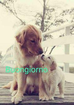 Good Morning Good Night, Dogs, Anna, Animales, Dibujo, Doggies, Pet Dogs