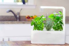This effortless indoor garden that's perfect for the mom who loves using fresh herbs, but maybe doesn't have the greenest thumb.