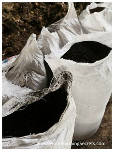 Compost With Worms - Worm Composting Information & Advice