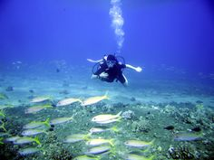 Scuba Diving - Cayman Islands Barrier Reef