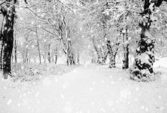 7x5ft White Accumulated Snow Woods Christmas Photography ... https://www.amazon.com/dp/B01GV26LW6/ref=cm_sw_r_pi_dp_x_dbwpybY4900G5