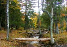Trees line a creek in the Porcupine Mountains Wilderness State Park in the fall