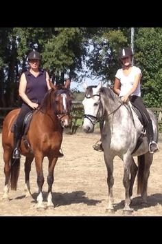 Horses 2012