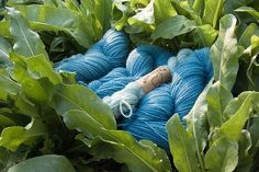 Riihivilla, Dyeing with natural dyes: My dyeings with woad Fabric Yarn, How To Dye Fabric, Natural Dye Fabric, Natural Dyeing, Textiles, Shibori, Dyeing Yarn, Dyeing Fabric, Mother Nature
