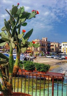 Sicilia sicily travel, italian life, sicily italy, beautiful places i Beautiful Places In The World, Wonderful Places, Sicily Travel, Plant Background, Italian Life, Sicily Italy, Cities, Packing Tips For Travel, Cacti And Succulents
