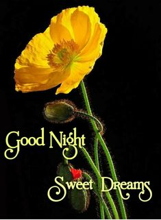 Good Night Greetings, Good Morning Messages, Morning Quotes, God Nat, Cute Kiss, Good Night Blessings, Good Night Sweet Dreams, Happy Flowers, Beautiful Beaches