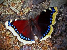 butterfly - half in sun and half in shadow - what is colour?