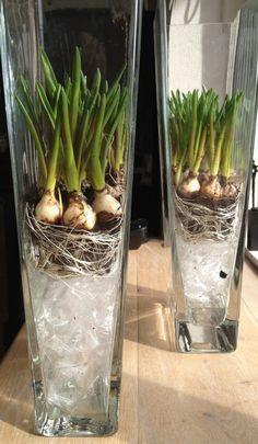 hoge glazen vaas met bloem-bollen onderin e.v.t mos of gekleurd folie