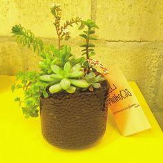 Já tem programa pra hoje? Participe da Design Weekend com a gente! Estamos na @casastopa rua Heitor Penteado 699.  #oitominhocas #ceramica #suculentas #suculovers #arranjodesuculentas #decoração #plantinhas #designweekend2016
