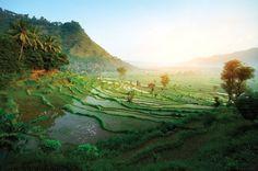 The World Heritage subak or rice terraces in Bali