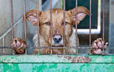 A bill requiring dog breeders to be registered doesn't go far enough to address animal overpopulation or protect dogs in puppy farms. Urge authorities to ban the sale of animals that don't come from shelters or rescues.