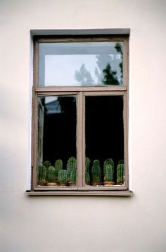 cacti | imogene + willie