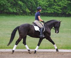 apply a quiet driving aid while engaging her core and softly closing her fingers on the rein. These aids should be applied within the rhythm of the gait to maintain the quality of the horse's movement Equestrian Boots, Equestrian Outfits, Equestrian Style, Equestrian Fashion, Riding Hats, Riding Helmets, Riding Gear, Riding Horses, Types Of Horses