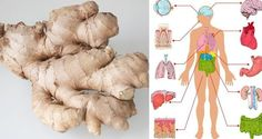 "In the traditional Ayurvedic medicine, ginger has been referred to as a ""natural medicine chest"", due to its numerous health benefits. In India, it is used on a daily basis, as the ginger-infused C… What Is Ginger, How To Eat Ginger, Varicose Vein Remedy, Varicose Veins, Health Benefits Of Ginger, Ginger Tea, Ginger Juice, Grow Ginger, Natural Medicine"