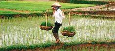 16 días de viaje por Vietnam más auténtico