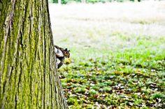 londra mon amour CXXV - squirrel